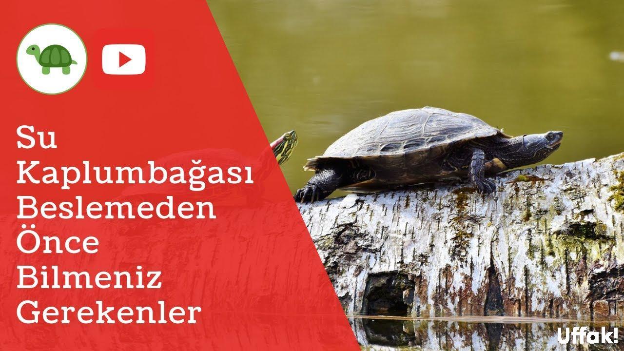 Su Kaplumbağası Bakımı - Video Rehberi